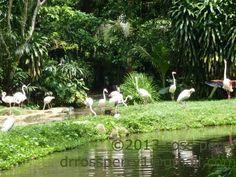 Singapore Vacation, Vacation Trips, Garden Sculpture, Island, Outdoor Decor, Islands