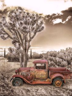 Rust In The Desert is a photograph by Don Schimmel. Rusty old jalopy has found it's final resting place out in the desert sun; with occasional shade from it's joshua tree neighbor. Source fineartamerica.com