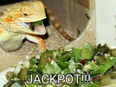 Nutrition Content, this website has a great list of what bearded dragons can and can't eat. need to print this Bearded Dragon Habitat, Bearded Dragon Cage, Bearded Dragon Funny, Bearded Dragon Food List, Dragons, Dragon Pictures, Dragon Pics, Pet Lizards, Cute Reptiles