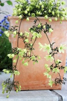 Thrilling About Container Gardening Ideas. Amazing All About Container Gardening Ideas. Greenhouse Gardening, Container Gardening, Garden Trellis, Garden Plants, Beautiful Gardens, Beautiful Flowers, Garden Entrance, Container Flowers, Succulent Containers