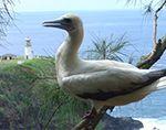 Kīlauea Point, National Wildlife Refuge, Kauai, Hawaii