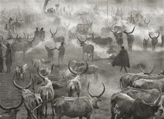 Sebastião Salgado, Dinka Camp Southern Sudan on ArtStack #sebastiao-salgado #art