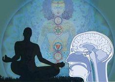 Estudio de Harvard da a conocer lo que la meditación literalmente hace al cerebro | La Mente Conectada