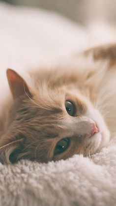 Why are cats so cute and cuddly? - - - Tiere - Why are cats so cute and cuddly? - - Why are cats so cute and cuddly? Cute Baby Cats, Cute Cats And Kittens, Cute Baby Animals, Kittens Cutest, Cute Dogs, Wallpaper Gatos, Cute Cat Wallpaper, Pretty Cats, Beautiful Cats