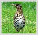 Vogelbescherming Nederland | Algemene tuinvogels