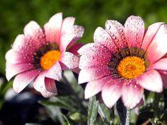 Imagens Lindas - Imagens lindas de flores