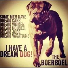 South African Boerboel Mastiff
