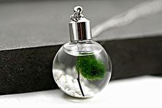NEW: Living Locket - Water Necklace with pebble stones, wood and living Marimo moss. by VillaSorgenfrei on Etsy https://www.etsy.com/listing/211110671/new-living-locket-water-necklace-with