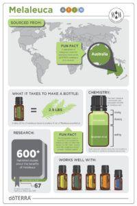 Facts about doTERRA Melaleuca essential oil! Melaleuca Essential Oil, Essential Oils Guide, Doterra Essential Oils, Essential Oil Diffuser, Doterra Diffuser, Healing Oils, Diffuser Blends, Natural Oils, Au Natural