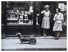 Dog on Wheels, Paris, France (1977) by Robert Doisneau