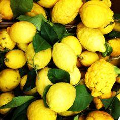 Limoni di Sorrento 2013