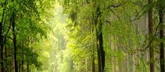 good-looking-forest-road-Wallpaer-HD