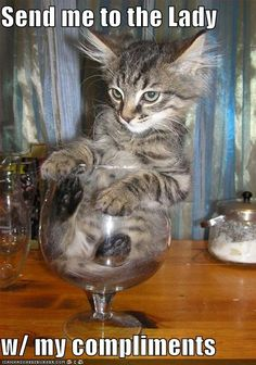 Kitty, one glass is obviously too much for you.