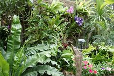 Google Image Result for http://www.greathomeinterior.com/wp-content/uploads/2011/07/Tropical-Garden-Design-With-Shrub-And-Ornamental-Plants.jpg