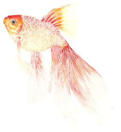 Based in California, Stephanie Kubo is the artist behind these beautifully intricate mesmerising designs. Watercolor Animals, Watercolor Paintings, Watercolors, Sea Drawing, Graphic Wallpaper, Elements Of Art, Tropical, Watercolor Pattern, Fish Art