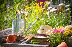 Gardening is not only good for pollinators but it is good for your health too! so get out there and begin gardening to make the world a better place!