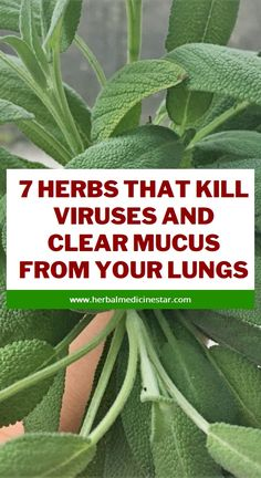The Truth Revealers: 7 Herbs That Kill Viruses and Clear Mucus from You. Herbal Remedies, Health Remedies, Home Remedies, Natural Teething Remedies, Natural Cold Remedies, Health Vitamins, Herbal Medicine, Natural Medicine, Health Foods