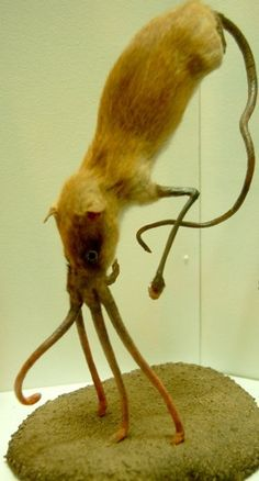 "Nasobema lyricum, aka ""Snouter"" in the Folklore Section of the Haus der Nature Museum, Austria."