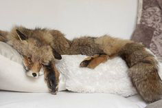Red fox pelt skin wallhanger taxidermy fur