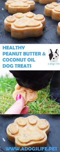 Make these homemade Healthy Peanut Butter & Coconut Oil Dog Treats for your furry friend! Full of health benefits for a healthy coat, good skin condition & many more benefits!
