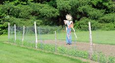 The kiddos and I made a scarecrow yesterday. It is one of those things we have wanted to make but just never seem to get around to it. Well this year I have already replanting my pumpkin patch twic… Make A Scarecrow, Scarecrow Ideas, Scarecrows For Garden, Brown Hair With Blonde Highlights, Backyard Garden Landscape, Party Hats, Fall Decor, Outdoor Decor, How To Make