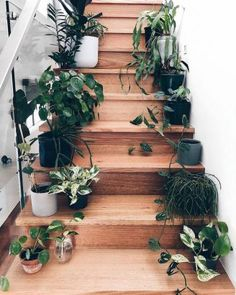 Brilliant 12 Elegant Home Stair Design With Ornamental Plants Ideas There are many ways to decorate your stairs, and the inclusion of botanical trends is the best alternative you can take. Nowadays, ornamental plants w. Indoor Garden, Indoor Plants, Balcony Garden, Home Stairs Design, Stair Design, Decoration Plante, Stair Decor, Plant Aesthetic, Plants Are Friends
