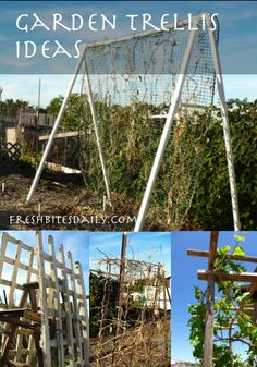 Garden trellis ideas for climbing vines