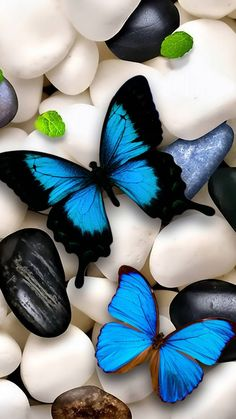 Butterfly 1 wallpaper by Ninoscha - ce - Free on ZEDGE™ Blue Butterfly Wallpaper, Butterfly Art, Colorful Wallpaper, Flower Wallpaper, Cute Images For Wallpaper, Animal Wallpaper, Decoration Vitrine, Stone Wallpaper, Hd Wallpaper