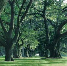 Avenue of the Oaks, St. Simons Island, GA