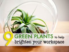 9 low-maintenance plants for the office