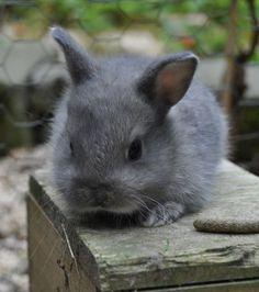 Un bébé lapin tout petit, tout gris