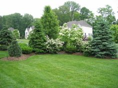 Privacy Landscaping with maturing evergreens and ornamental trees and flowering shrubs