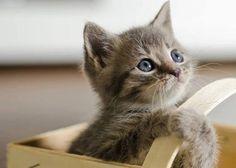 Lovely-KittyCats, bulldawg12: kitty in basket