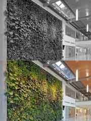 Leamington Municipal Office, bring nature inside. Living walls are the new chic.