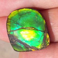 Ammolite Natural Polished Loose Stone Freeform 19HPLS$119.99#ammolite #korite #ammonite #fengshui #canada #canadagems #canadianammolite #gemstones #jewelry #jewelryaddict #photooftheday #jewelryoftheday #jewelrygram #colorful #gem #gems #opal #minerals #natureinspired #rainbow #alberta #fossil #Alaska #followersofinstagram #isellrocks #art #handmade #lapidary #madeinmontana #ammolite #ammolitestone