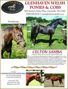 Glenhaven Welsh Ponies & Cobs