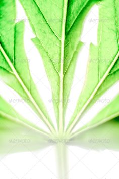 Cannabis leaf ...  background, cannabidiol, cannabinoid, cannabinol, cannabis, cbd, closeup, detail, drug, flora, flower, ganja, grass, green, grow, growing, hashish, health, healthcare, hemp, herb, hybrid, indica, leaf, leaves, life, macro, marihuana, marijuana, medical, medicinal, medicine, natural, nature, plant, pot, sativa, stage, strain, thc, weed