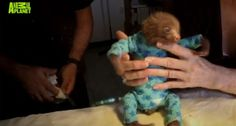 Baby Sloth in a Onesie