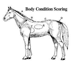 """Is your horse glowing with a shiny coat, great hooves and bright eyes? The outside of your horse reflects a lot about what's going on inside your horse. If not maybe you can use my motto and """"Go…"""