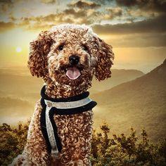 Teddy Bear, Animals, Instagram, Art, Product Engineering, Kunst, Art Background, Animales, Animaux