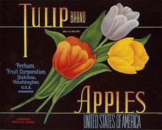 "RARE OLD ORIGINAL 1930's STUNNING ""TULIP BRAND"" APPLE CRATE LABEL YAKIMA WA"