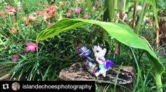 Krishna and Balaram enjoying the tropical showers.  A beautiful and creative capture from the wonderful @islandechoesphotography #captureKrishna #Krishnadolls . There is 1 day remaining so take your capture and enter the competition! Join the competition with a photo of Krishna radha or balaram doll & win a radha and krishna doll!! http://ift.tt/2kFMq7l . .Enter the competition to WIN a Radha & Krishna doll! . To enter upload your unique photo of your doll to Remember Krishna Art facebook…