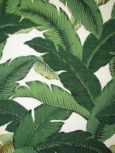 Fabric Designs TBO Swaying Palms Outdoor Aloe - Bridal Fabric by the Yard - Tommy Bahama Original Outdoor Fabric polyester water and oil repelent. Not intended for indoor upholstery. Motif Tropical, Tropical Leaves, Tropical Fabric, Tropical Pattern, Tropical Decor, Outdoor Fabric, Indoor Outdoor, Beverly Hills, Architecture Sketches