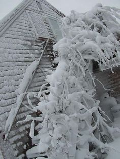 Winter Storm Juno, January 27-28, 2015, clobbered the island leaving an icy coating like this on my son's home.