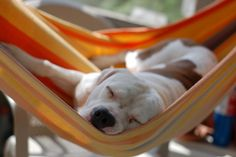 This dog | The Top 20 Animals Hanging Out In Hammocks