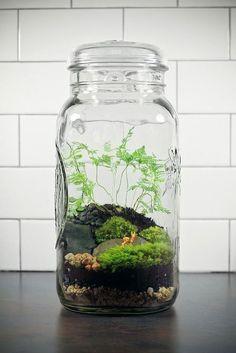 флорариум лесной