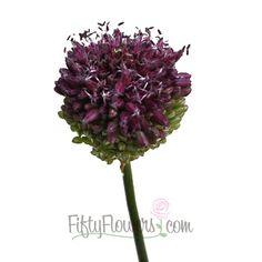 Allium Unique Flower Bloom - 50 stems for $90, 100 stems for $140, 200 stems for $230