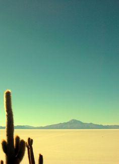 Desierto de Mojave, es la forma local de referirse al desierto Alto que ocupa una gran porción de California sur y otras más pequeñas de California Norte, suroeste de Utah, sur de Nevada y noroeste de Arizona, en los Estados Unidos.