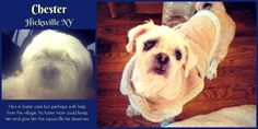 Hicksville NY: URGENT DOG FOOD DONATIONS & HELP WITH VETTING IS GREATLY NEEDED FOR CHESTER!