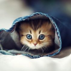 I think this wins 'cutest cat of the day' – What do you think?